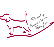 Beauty Succession's Beagles